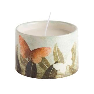 Candle-Buddleia